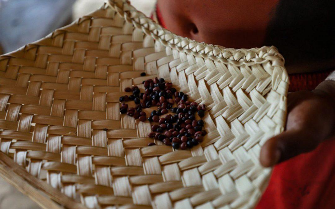 """População Xavante pratica """"economia do cuidado"""" através da colheita de sementes nativas"""