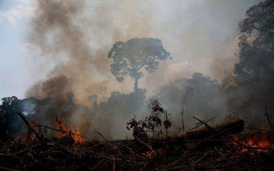 `Reserva Extrativista Chico Mendes sofre com queimadas ilegais